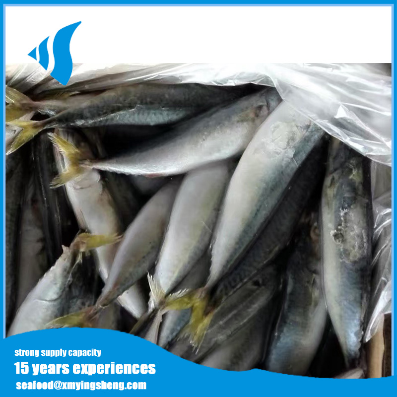 Marine fish Frozen Pacific Mackerel fish for Canned food