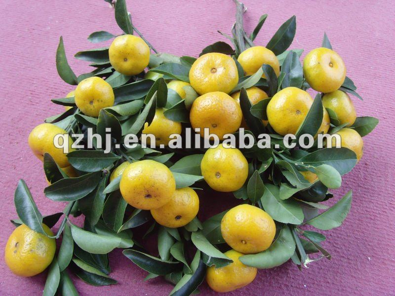 mandarin oranges from nanfeng, small and mini