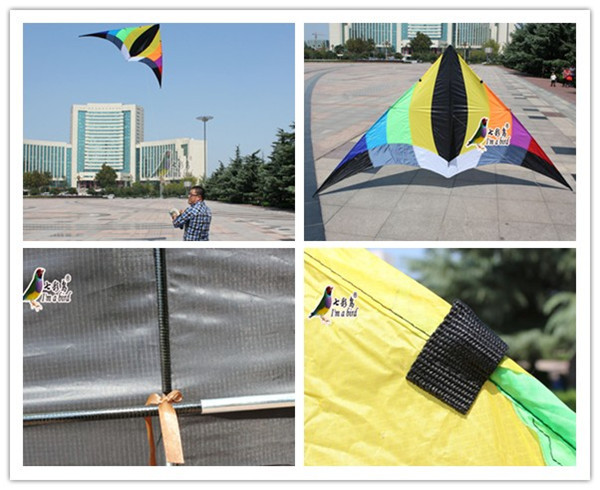 colorful delta wing fly kite