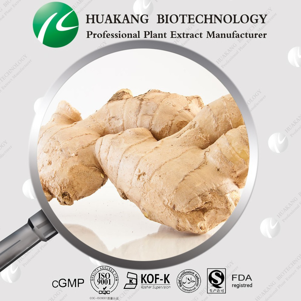 100% Pure Natural Ginger Root Extract with lower price(Ting)