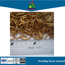 china golden fish larvae jar lure food