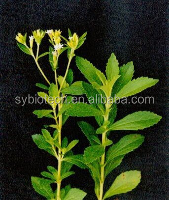 Stevia plant extract with Steviosides 90%,95%HPLC/GMP Certified Manufacturer