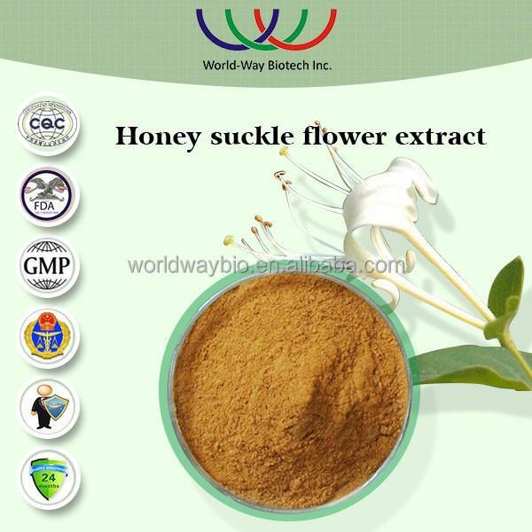 GMP factory supply best price 5% chlorogenic honeysuckle flower extracts from flos lonicerae