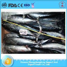 All Type of Bonito Fishes Frozen Sea Food Supplied.