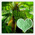 Trace Element Fertilizer NPK 15-5-30+3MgO+TE Special For Banana Tree