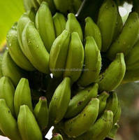 hot sale high quality banana importers in iran