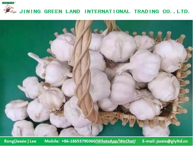 CHINA ORGANIC GARLIC GLOBAL GARLIC LOW PRICE HIGH QUALITY TO WORLD MARKET