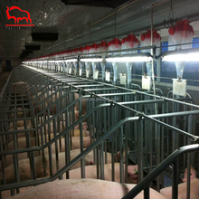 Quality Assurance Pig Farm Equipment Sow Galvanized Gestation Stall Cages