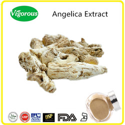 GMP Manufacturer Kosher Halal Dong Quai Extract Powder /angelica root extract