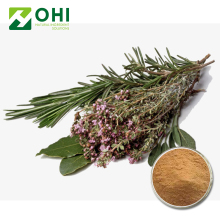 wholesale dried fresh organic rosemary leaves seed herb plant Extract powder