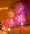 Inflatable Flower Cheap inflatable flower for wedding