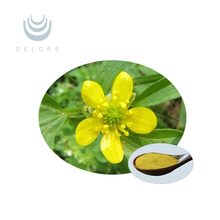 Herbal extract Cat's Claw Extract, Ranunculus Ternatus Thunb Extract, Alkaloid 3% 5% 10:1