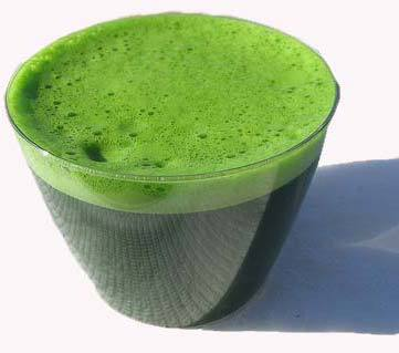 GMP factoty barley grass juice powder