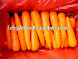 new fresh chinese carrot/size S and M