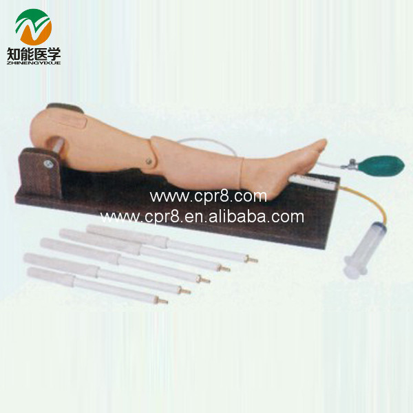 Practical Bone and Femoral Vein Puncture Leg Model