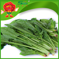 Fresh Vegetable Frozen Style Green Spinach Wholesale
