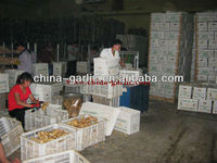 Ginger Price In China/Fresh Ginger For Europe Market