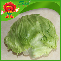 Yunnan fresh fruits and vegetables Organic lettuce
