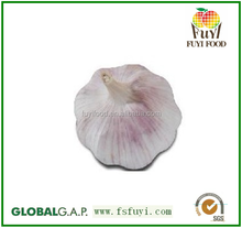 2015 china garlic price