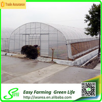 Large size single tunnel greenhouse for agricultural