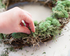 Multi colors real natural preserved moss for wall christmas decoration