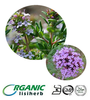 High quality Thyme extract powder / Thymus / Thymus vulgaris P.E.