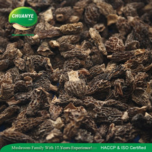 Best Morel For Sale Wild Dried Morels Morchella Conica Mushroom