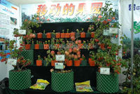 1,2,3,4L small young tree nursery pot