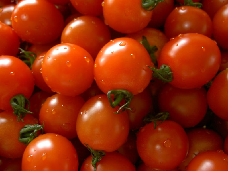Fresh Indian Tomatoes / FRESH NASHIK TOMATO FOR PAKISTAN