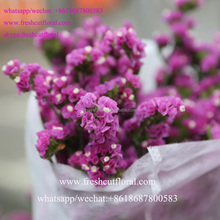 you can buy wholesale florist fresh flower sea lavender flower for wedding bouquet of flowers From China