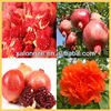 Kosher ceritified pomegranate ellagic acid 40% extract for cosmetical industry