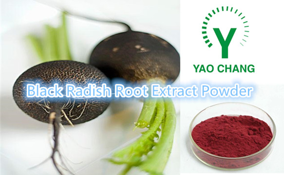 High Quality Black Radish Root Extract