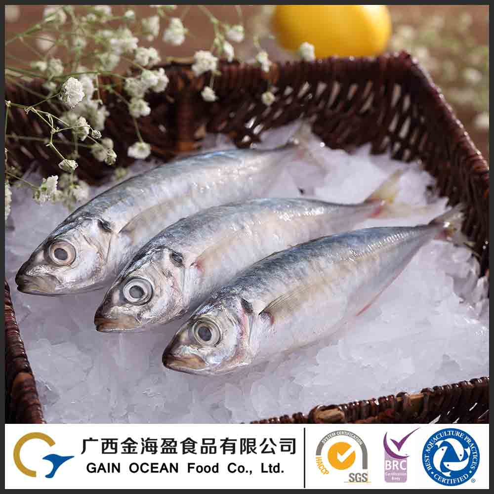 Cheap frozen sea food whole round blue scad fish wholesale