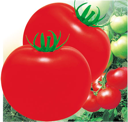 Big Red Fruit Tomato Seed For Sale FST 072