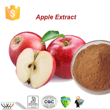 apple extract free sample for trial HACCP KOSHER FDA supplier pure nature cosmetics raw material apple extract polyphenol 80%