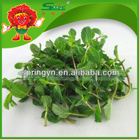 environmental protection Fresh Mint Leaves health benefit herbs