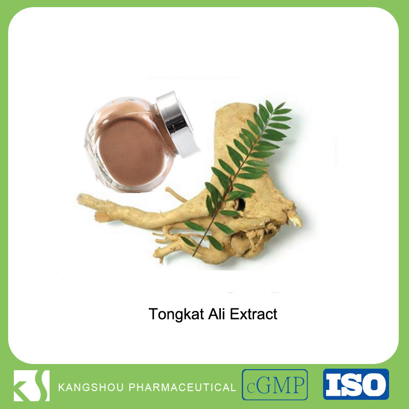 Herbal aphrodisiac Eurycoma longifolia Tongkat ali root extract powder