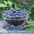 GMP Manufacturer Natural Chinese Bilberry Extracts KS-08