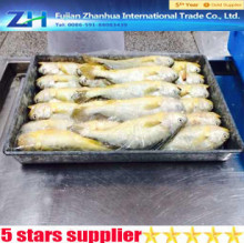 wholesales fresh frozen yellow croaker from China farming