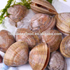 High quality seafood frozen shellfish clams with full shell