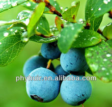 GMP standards:Blueberry Extract Juice 65 Brix