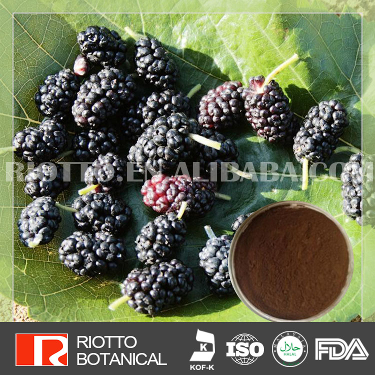 Free Samples White Mulberry Leaf Extract/ White Mulberry Leaf Extract Powder