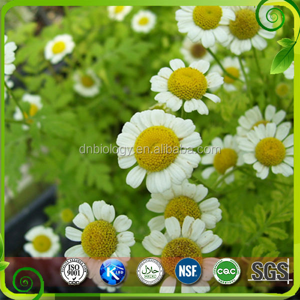 Sells organic Chamomile Extract chamomile standardized extract