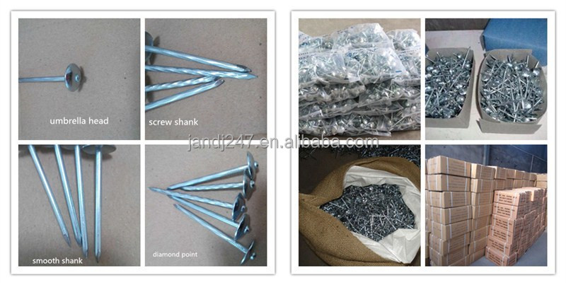 Galvanized Umbrella Head Roofing Nails In Guangzhou factory