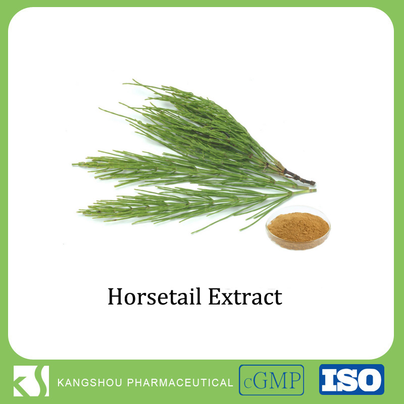 GMP Manufacturer Horsetail Grass Extract Silica 1%-7%