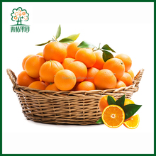 Good price of fresh orange for bulk order