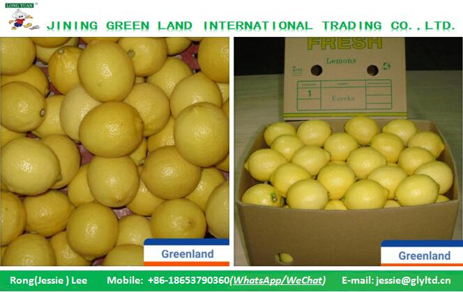 CHINA FRESH LEMON IN GOOD QUALITY ON SALE