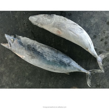 China origin Frozen Skipjack Tuna with reasonable price