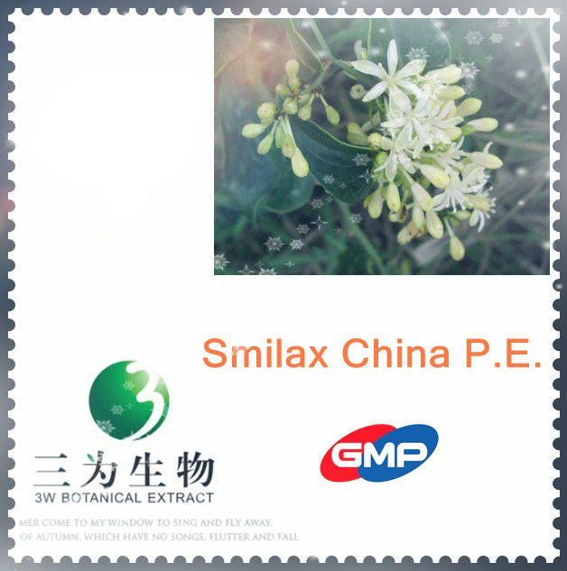 Pure Natural Smilax P.E. from 3W GMP factory