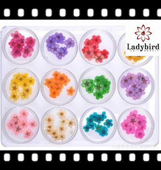 2014 Ladybird newest decor/nail flower decoration/nail art dried flower deoration